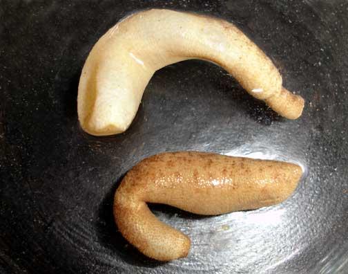 Phascolosoma nigrescens. peanut worm - Marine ...