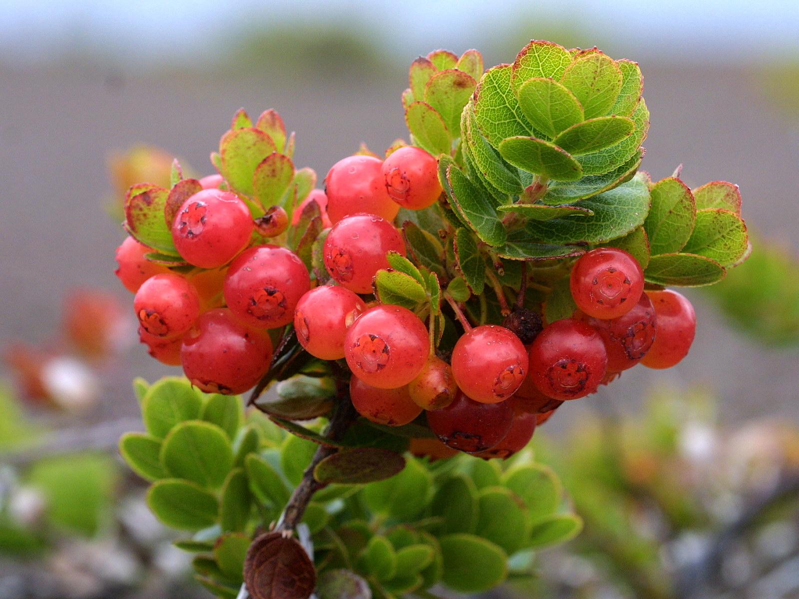 Big Island Plants Hawaii