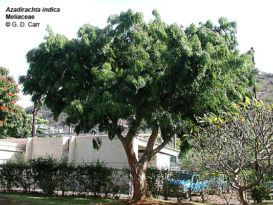 Can Using Neem Oil On My Dog Avoid Getting Mites