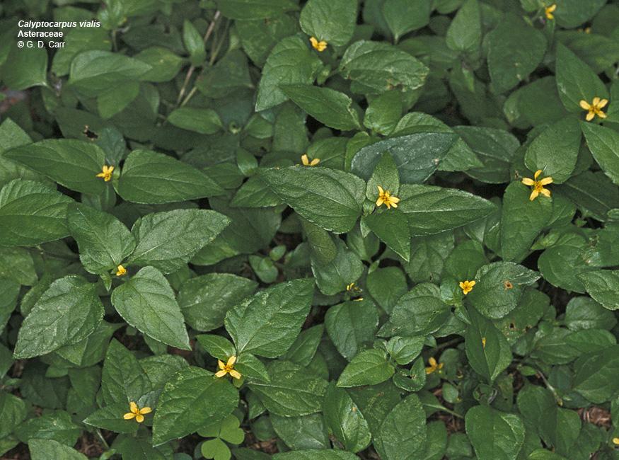 University Of Hawaii Campus Plants Uh Botany