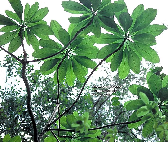 Flowering Trees Identification