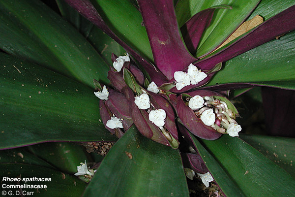 Garden Design For Families garden design: garden design with biologykids: plants: mosses