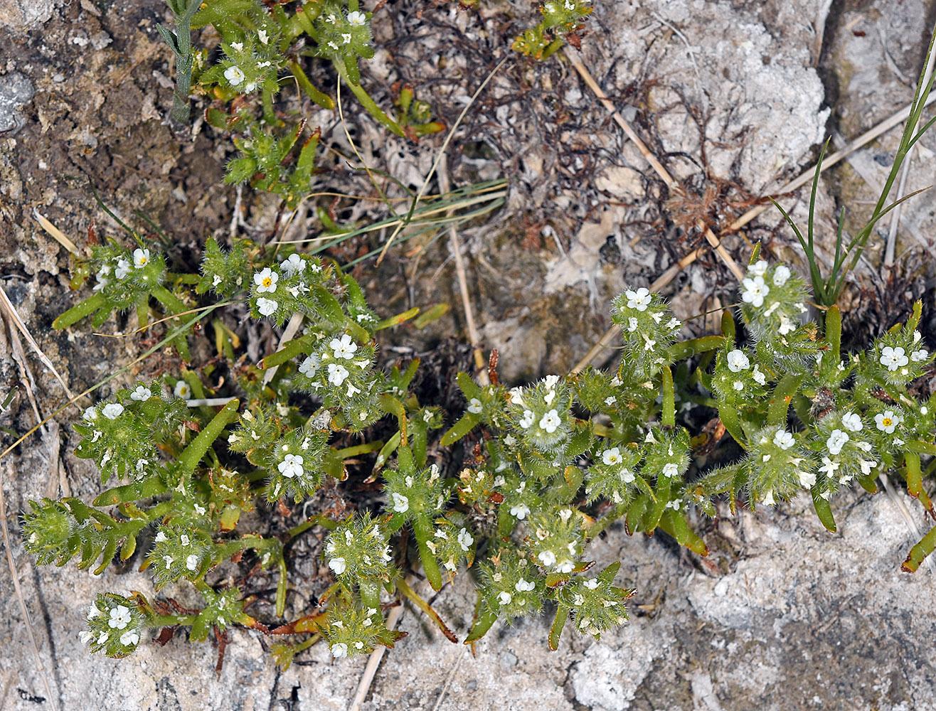 Oregon Flora Project