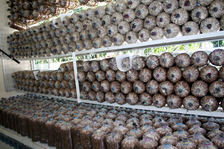 cultivation_of_edible_mushrooms