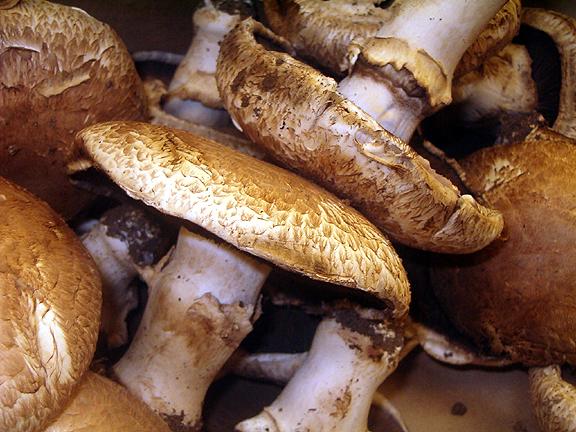 cultivation of edible mushrooms rh botany hawaii edu