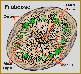 lichen fungi and algae relationship
