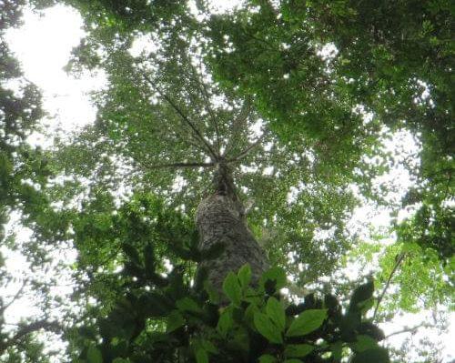 Anna Sugiyama research tree