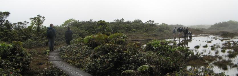 Field Botany Alakai Swamp 2